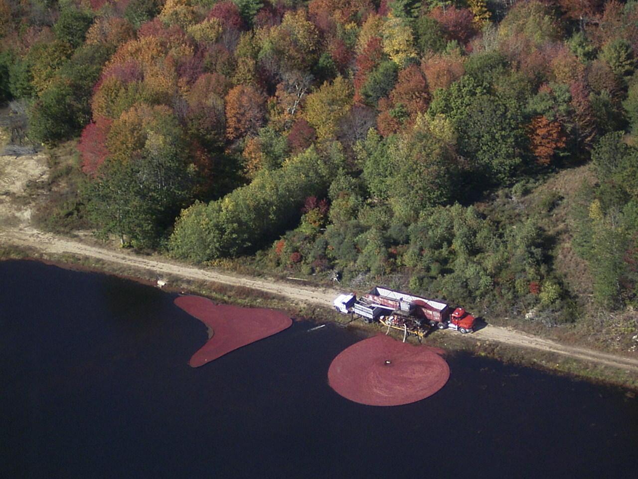 Cranberry Harvest - South Shore, MA
